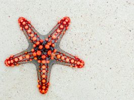 starfish names