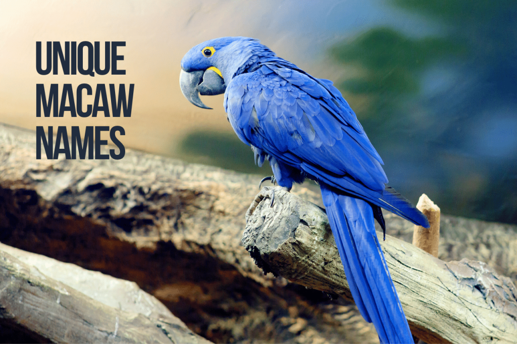 unique macaw names