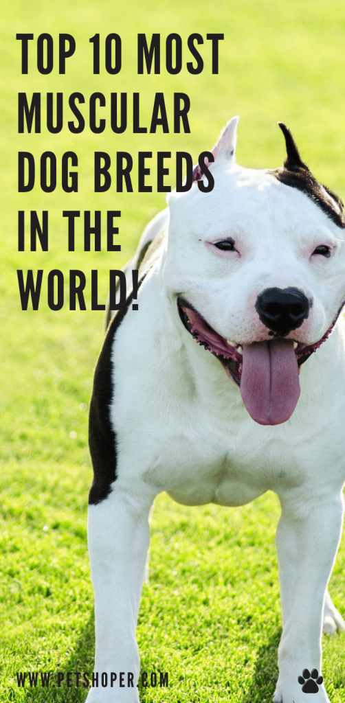 top 10 most popular dog breeds in the word pin