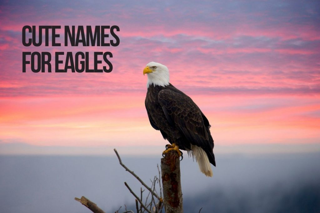 Cute Names for Eagles