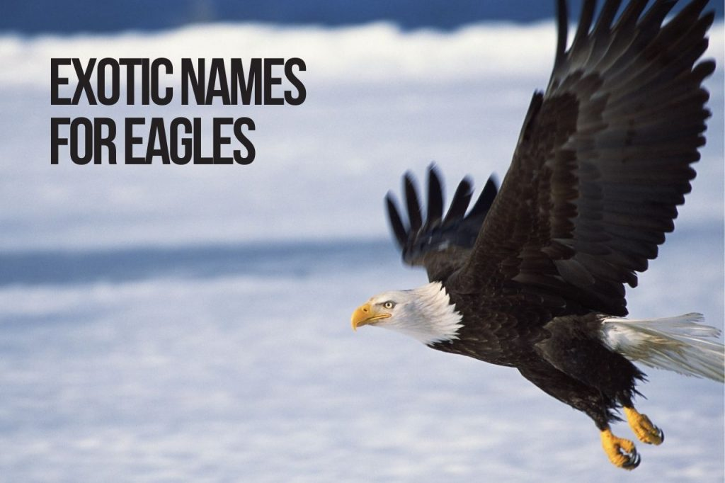Exotic Names for Eagles