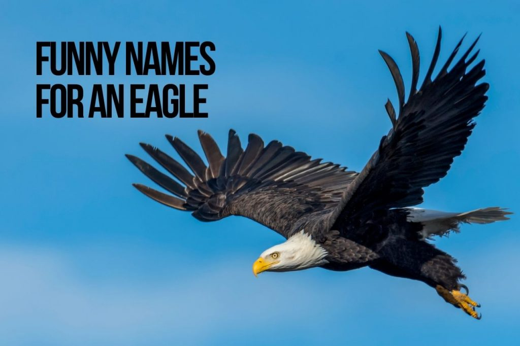Funny Names for an Eagle